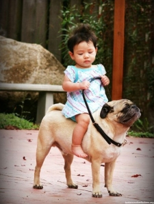 Babies-Riding-Dogs-6