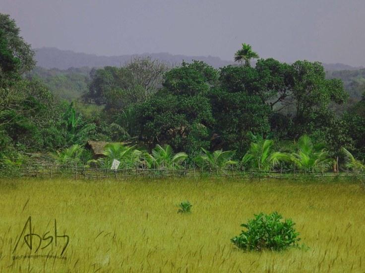 Western Ghats 1