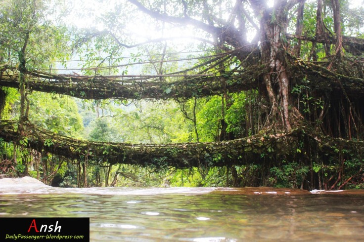 Cherrapunji Living root bridges