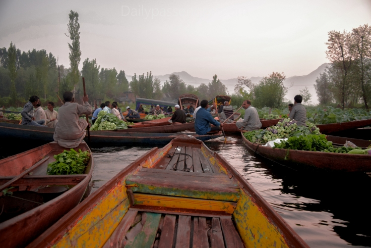 Srinagar portraits (4 of 11)