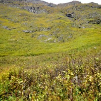 A guide to Valley of Flowers solo trek in INR 3000