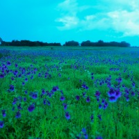 Tips and guide to visit Kaas Plateau – Maharashtra's Valley of Flowers