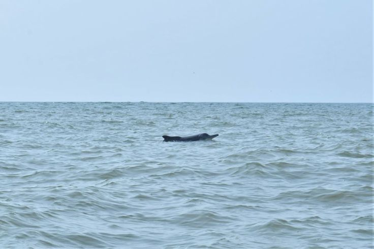Gokarna dolphins