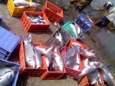 Gokarna fish seafood