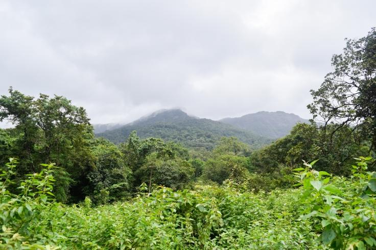 Western Ghats (1)